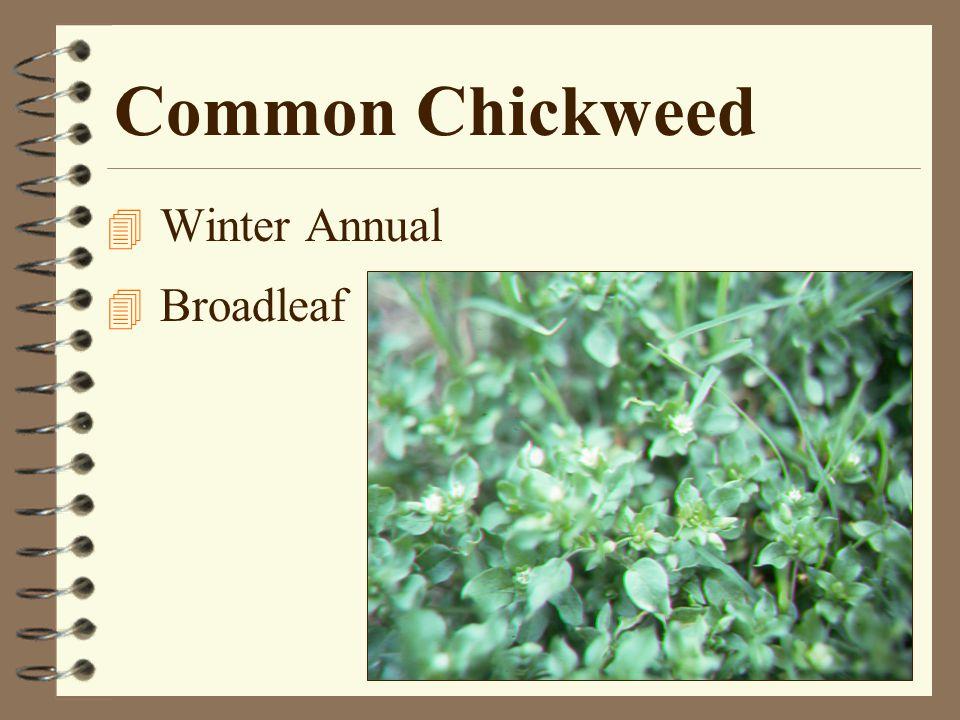 Postemergence Broadleaf Weed Control 4 2,4-D Amine + MCPP –Chipco Turf Kleen –Ortho Weed-B-Gon Killer –2 Plus 2 4 2,4-D amine + MCPP + Dicamba –Greenlight's Wipeout Broadleaf Weed Killer –Ortho's Chickweed, Spruge & Oxalis Killer –Gordon's Trimec –Lesco's Three Way