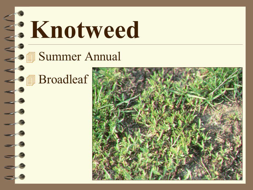 Knotweed 4 Summer Annual 4 Broadleaf