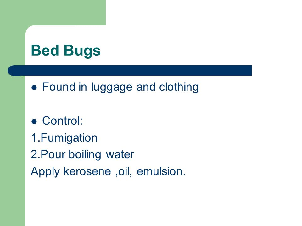 Bed Bugs Found in luggage and clothing Control: 1.Fumigation 2.Pour boiling water Apply kerosene,oil, emulsion.