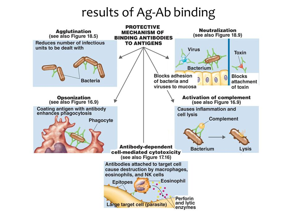 results of Ag-Ab binding