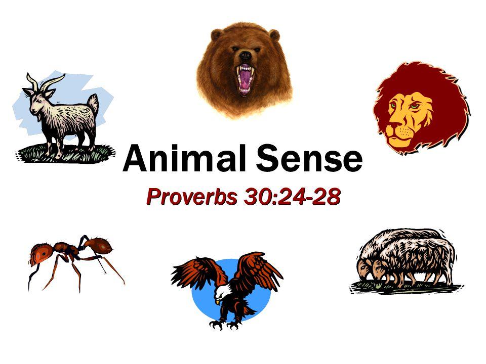 Animal Sense Proverbs 30:24-28
