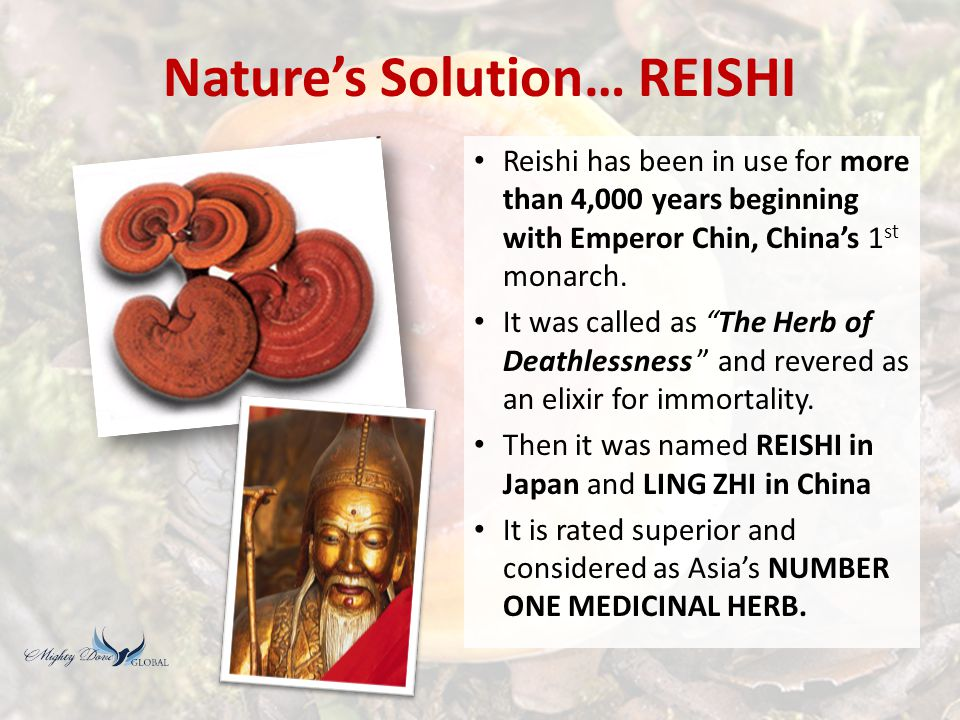 REISHI… Validated by Modern Science Its scientific name is … GANODERMA LUCIDUM.