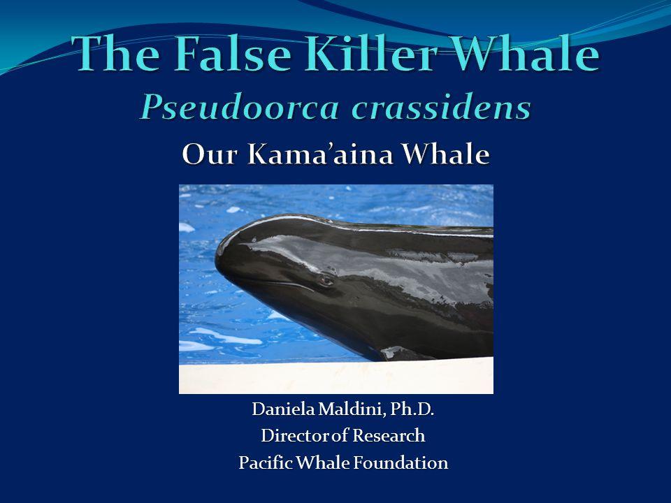 Daniela Maldini, Ph.D. Director of Research Pacific Whale Foundation