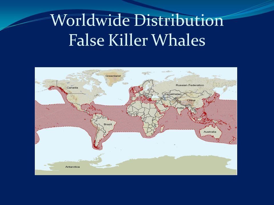 Worldwide Distribution False Killer Whales