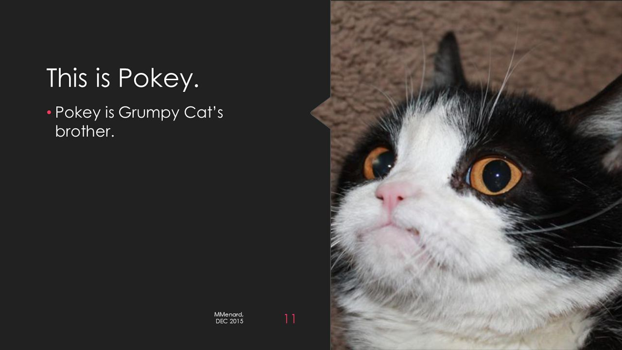 This is Pokey. Pokey is Grumpy Cat's brother. MMenard, DEC 2015 11