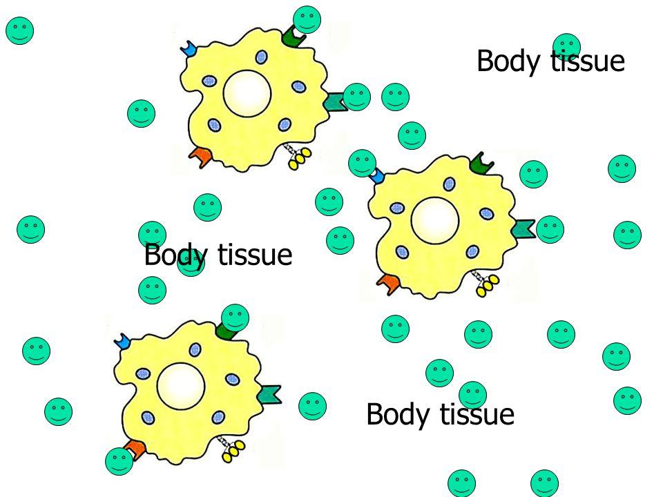 Body tissue