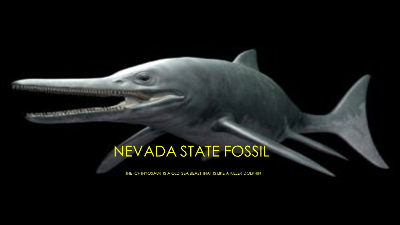 NEVADA STATE FOSSIL THE ICHTHYOSAUR IS A OLD SEA BEAST THAT IS LIKE A KILLER DOLPHIN