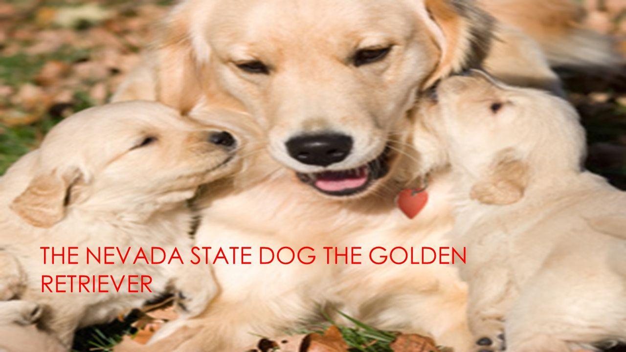 THE NEVADA STATE DOG THE GOLDEN RETRIEVER