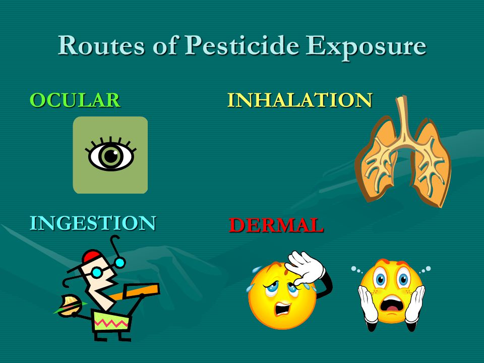 Routes of Pesticide Exposure OCULAR INGESTION INHALATION DERMAL DERMAL