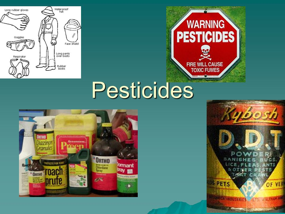 Pesticides -Pros and Cons  Kill unwanted pests that carry disease (rats, mosquitoes, Tse-Tse flies)  Increase food supplies  More food means food is less expensive  Effective and fast-acting  Newer pesticides are safer, more specific  Reduces labor costs on farms  Food looks better  Agriculture is more profitable  Accumulate in food chain  Pests develop resistance – 500 species so far  Resistance creates pesticide treadmill  Estimates are $5-10 in damage done for $1 spent on pesticide  Pesticide runoff  Destroy bees - $200 million  Threaten endangered species  Affect egg shell of birds  5% actually reach pest  ~20,000 human deaths/year