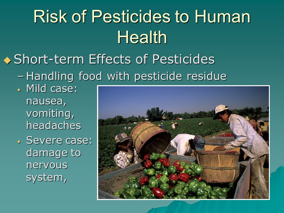 Risk of Pesticides to Human Health  Short-term Effects of Pesticides –Handling food with pesticide residue Mild case: nausea, vomiting, headaches Mil