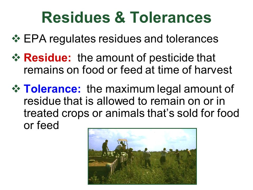 Setting Pesticide Tolerances EPA considers  Toxicity of pesticide and its breakdown products  Amount and frequency of application  Amount of pesticide remaining on food at time of market or processing  United States Department of Agriculture (USDA) information on eating habits EPA review