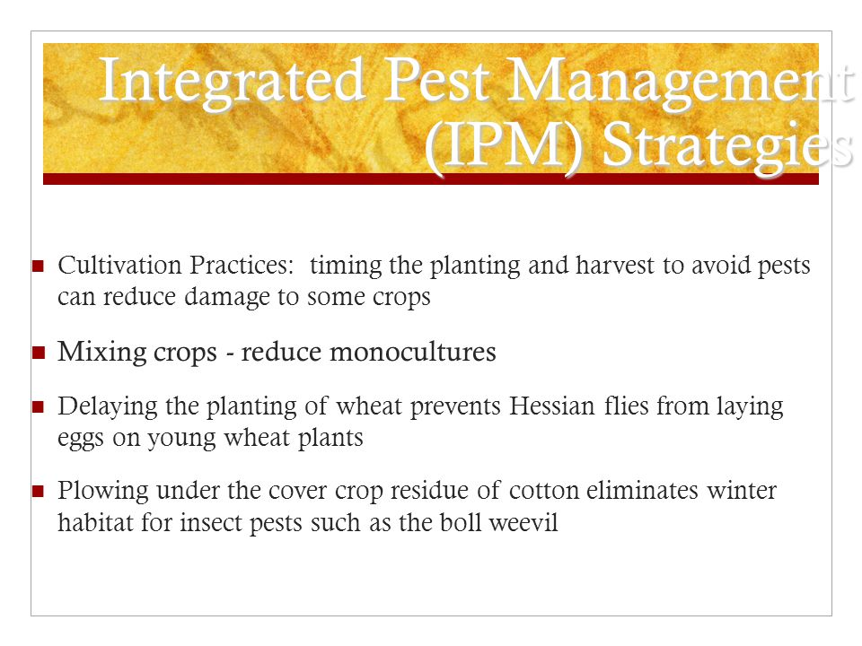 Integrated Pest Management (IPM) Strategies Cultivation Practices: timing the planting and harvest to avoid pests can reduce damage to some crops Mixi