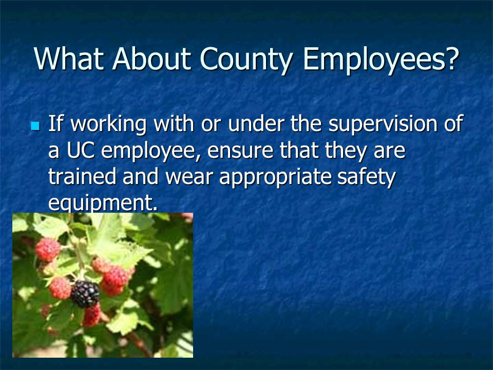 What About County Employees.