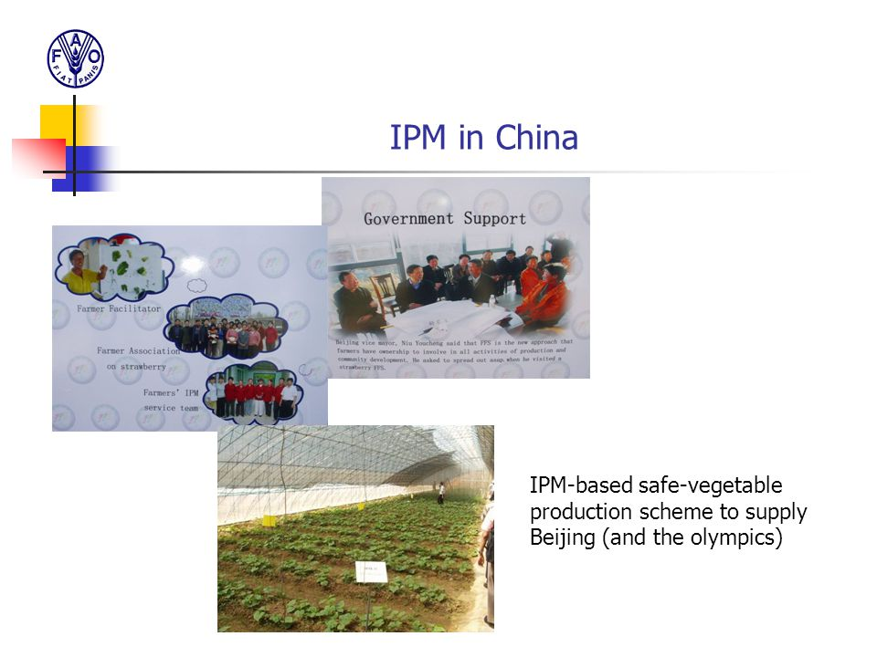IPM in China IPM-based safe-vegetable production scheme to supply Beijing (and the olympics)