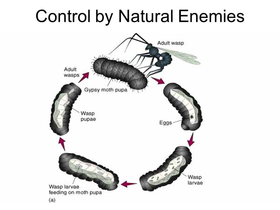 Control by Natural Enemies