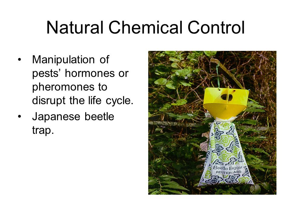 Natural Chemical Control Manipulation of pests' hormones or pheromones to disrupt the life cycle.