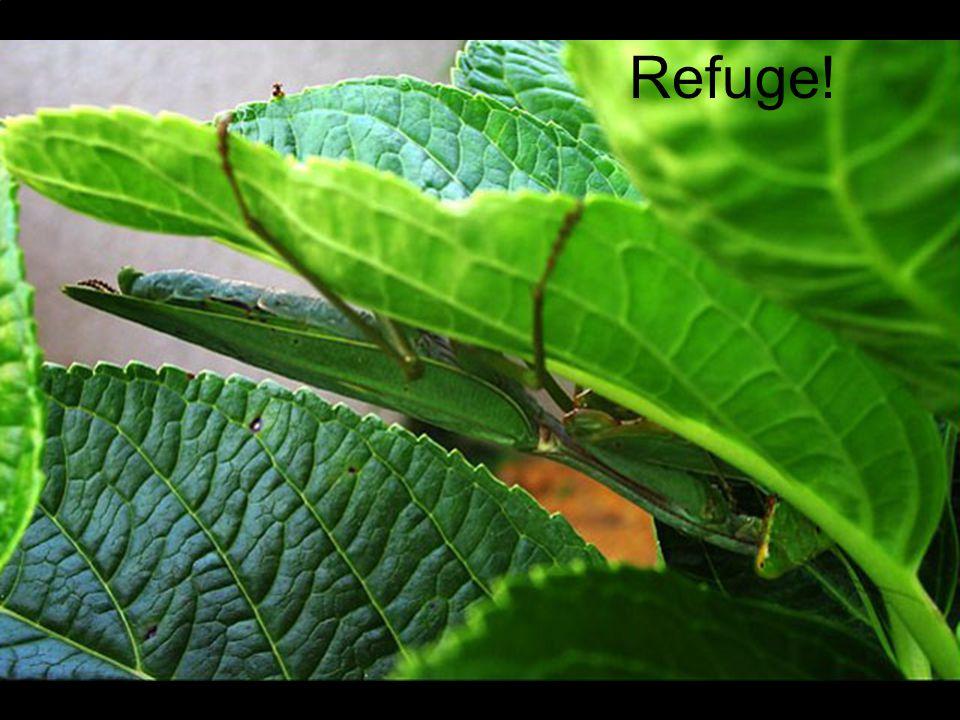 Refuge!