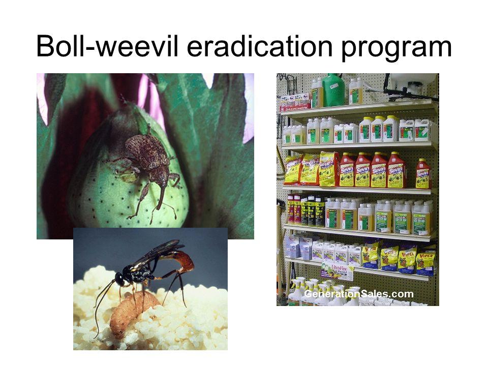 Boll-weevil eradication program