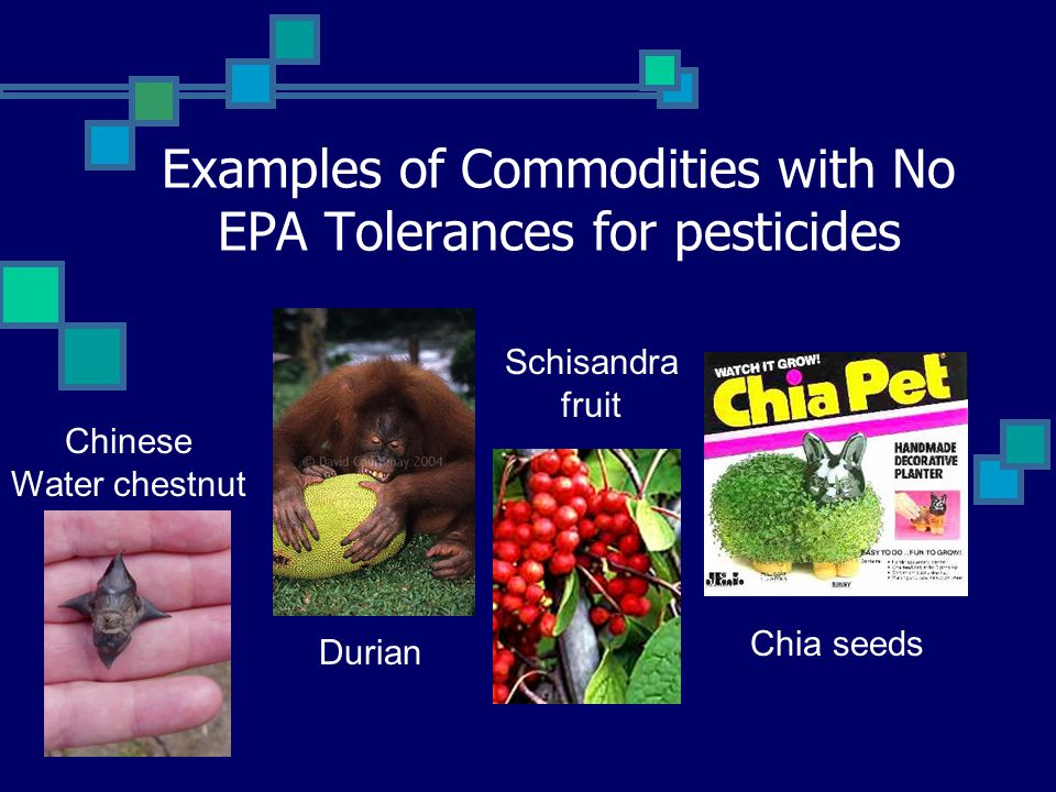 Examples of Commodities with No EPA Tolerances for pesticides Chinese Water chestnut Durian Schisandra fruit Chia seeds