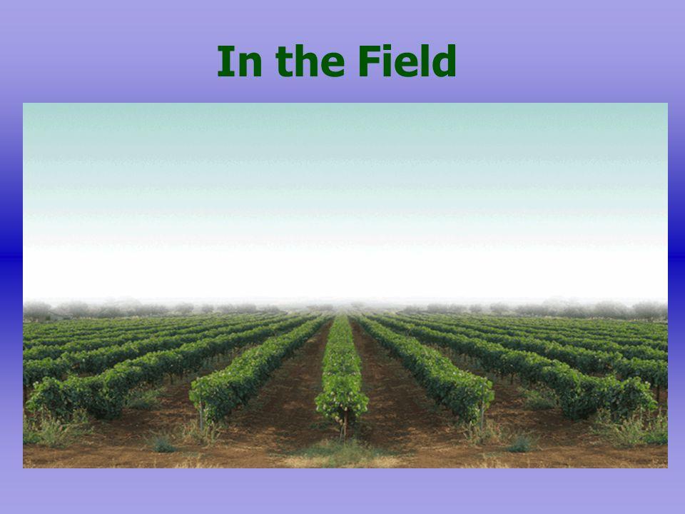 Field Work During Pesticide Application:  Forbidden.