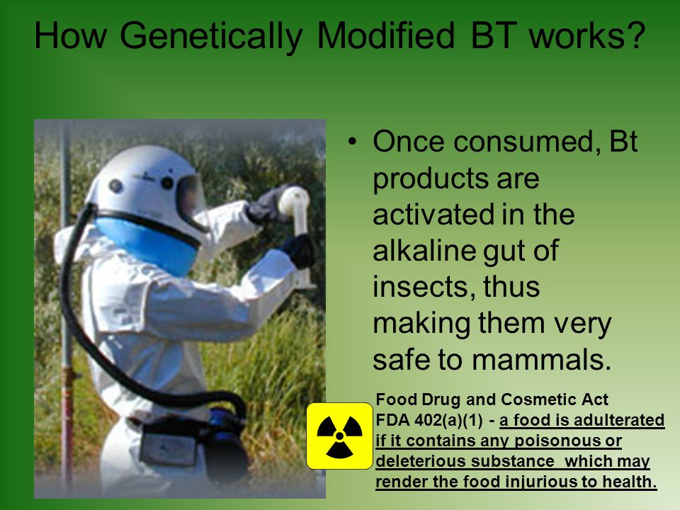How Genetically Modified BT works.