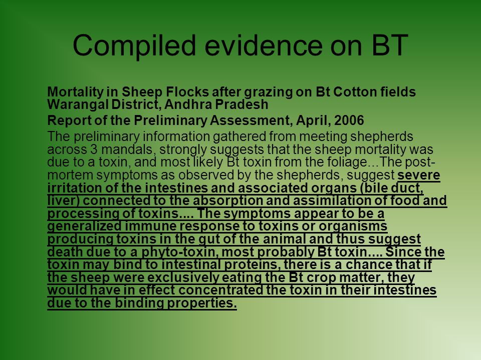Compiled evidence on BT Mortality in Sheep Flocks after grazing on Bt Cotton fields Warangal District, Andhra Pradesh Report of the Preliminary Assessment, April, 2006 The preliminary information gathered from meeting shepherds across 3 mandals, strongly suggests that the sheep mortality was due to a toxin, and most likely Bt toxin from the foliage...The post- mortem symptoms as observed by the shepherds, suggest severe irritation of the intestines and associated organs (bile duct, liver) connected to the absorption and assimilation of food and processing of toxins....
