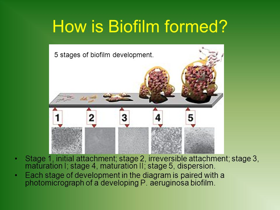 How is Biofilm formed.
