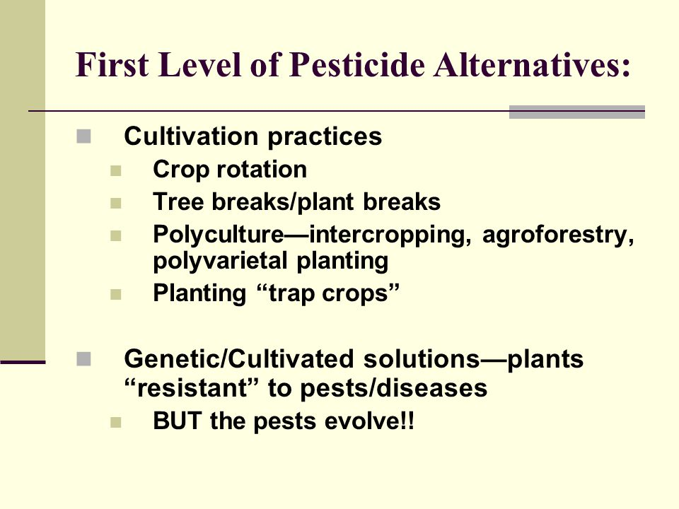 First Level of Pesticide Alternatives: Cultivation practices Crop rotation Tree breaks/plant breaks Polyculture—intercropping, agroforestry, polyvarietal planting Planting trap crops Genetic/Cultivated solutions—plants resistant to pests/diseases BUT the pests evolve!!