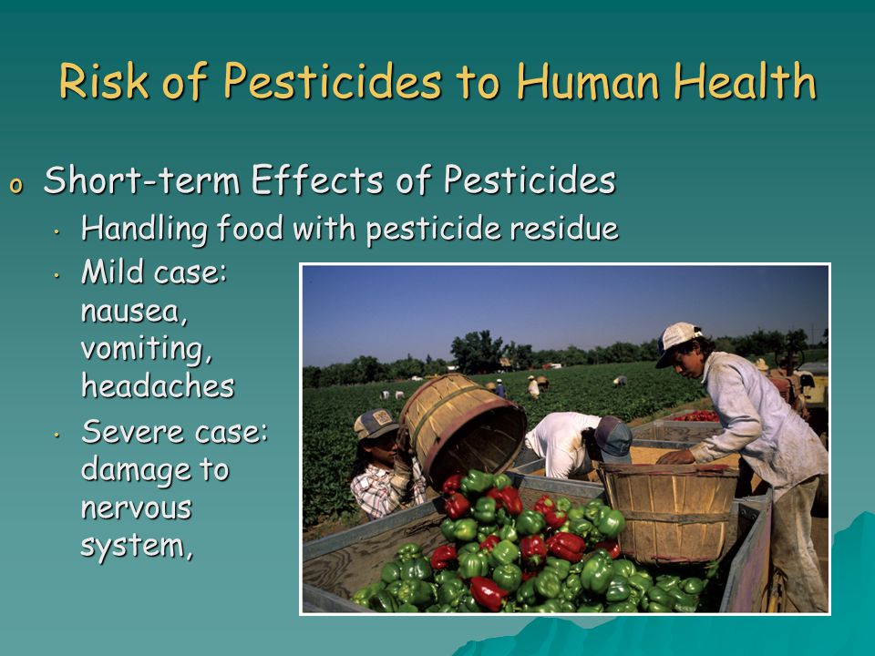 Risk of Pesticides to Human Health o Short-term Effects of Pesticides Handling food with pesticide residue Handling food with pesticide residue Mild case: nausea, vomiting, headaches Mild case: nausea, vomiting, headaches Severe case: damage to nervous system, Severe case: damage to nervous system,