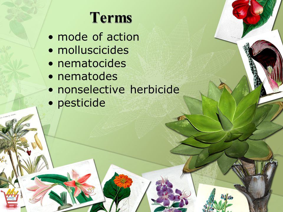 What are the major classifications of herbicides.