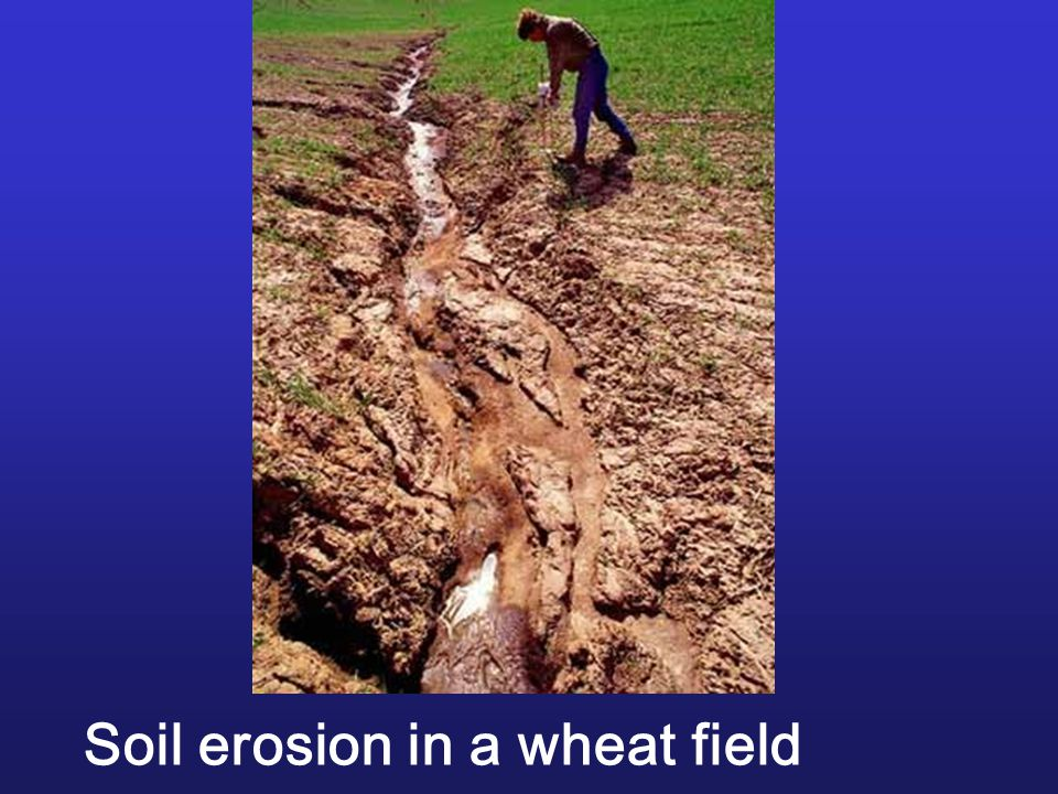 Soil erosion in a wheat field