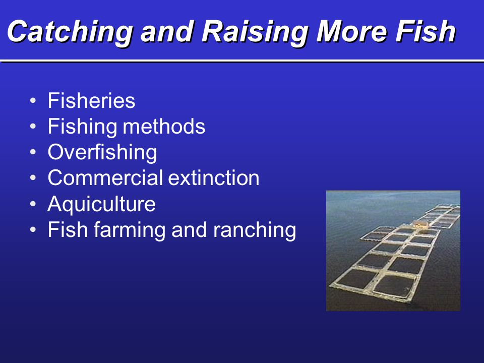 Catching and Raising More Fish Fisheries Fishing methods Overfishing Commercial extinction Aquiculture Fish farming and ranching