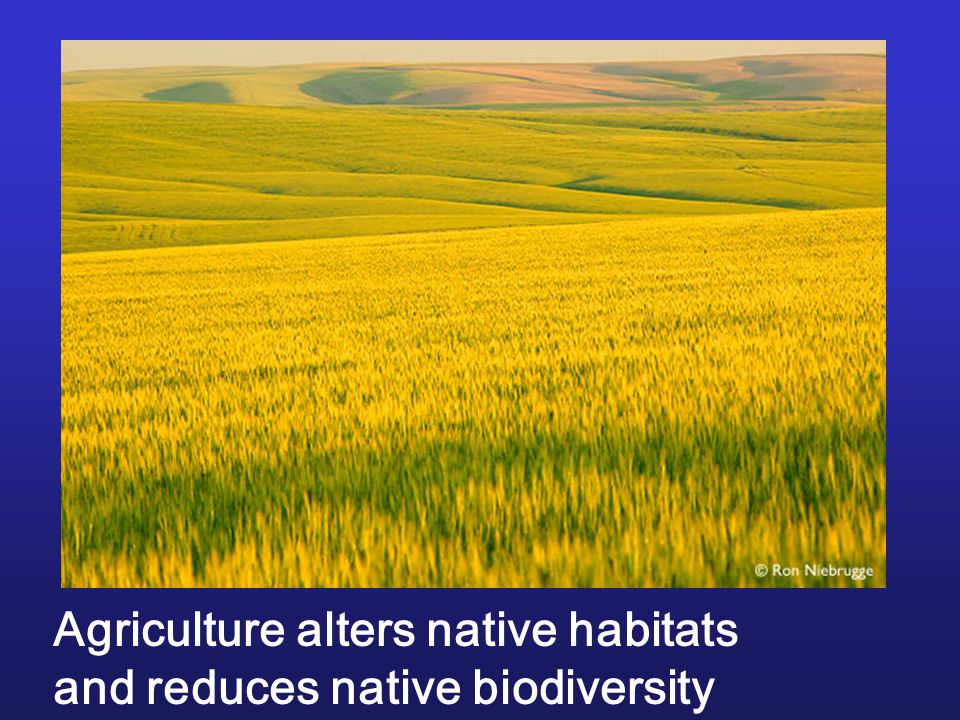 Agriculture alters native habitats and reduces native biodiversity