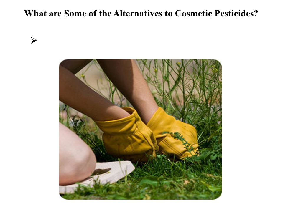 What are Some of the Alternatives to Cosmetic Pesticides 
