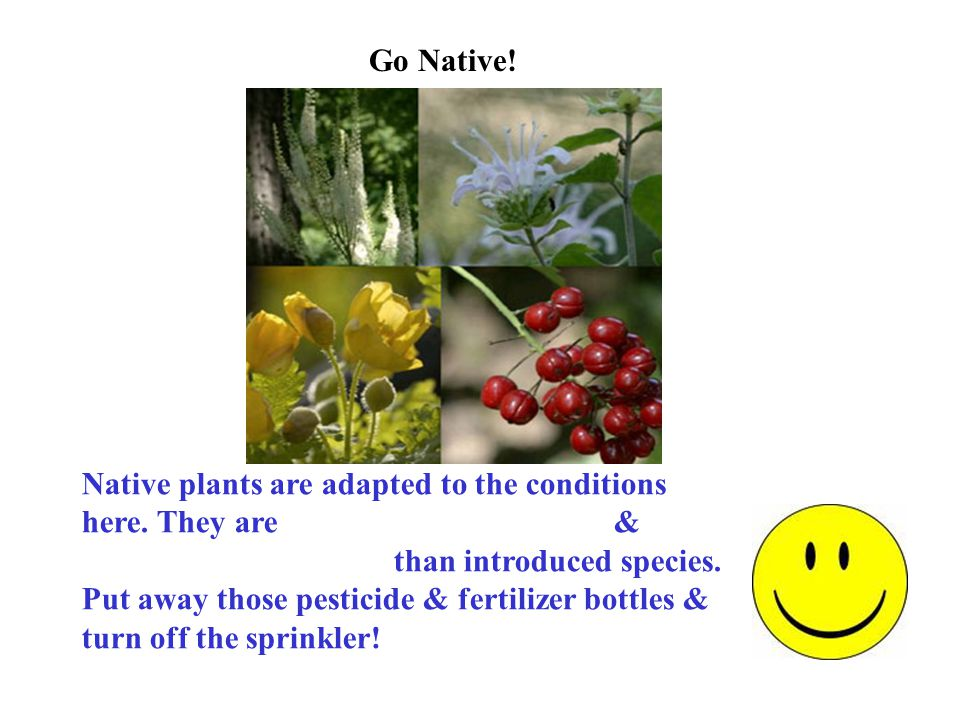 Go Native. Native plants are adapted to the conditions here.