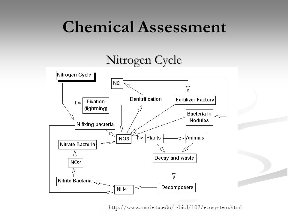 Chemical Assessment Nitrogen Cycle http://www.marietta.edu/~biol/102/ecosystem.html