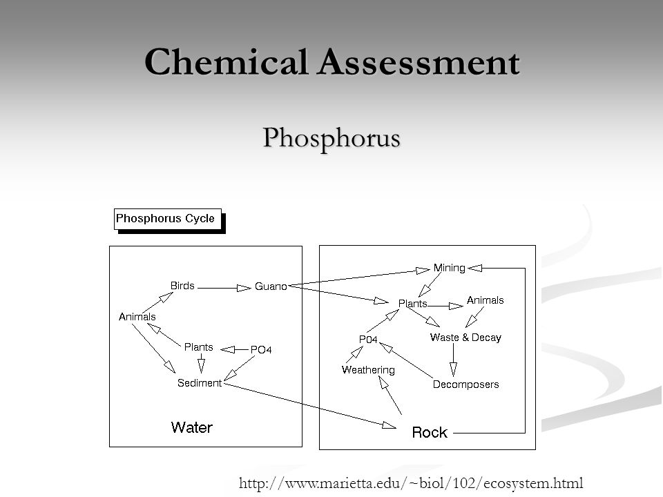 Chemical Assessment Phosphorus http://www.marietta.edu/~biol/102/ecosystem.html