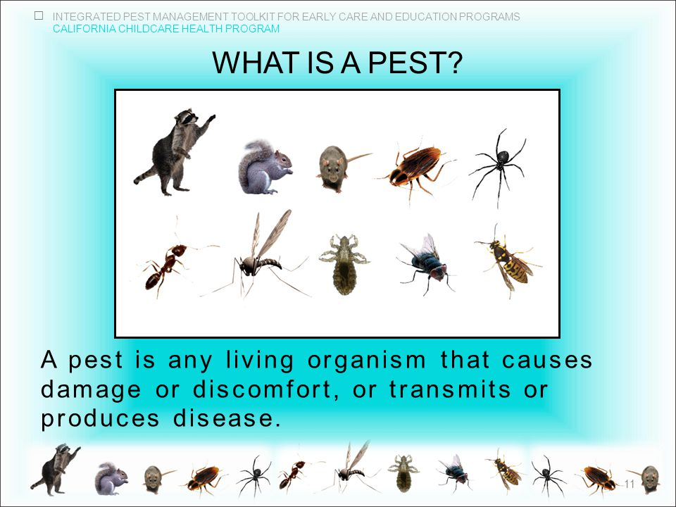 INTEGRATED PEST MANAGEMENT TOOLKIT FOR EARLY CARE AND EDUCATION PROGRAMS CALIFORNIA CHILDCARE HEALTH PROGRAM WHAT IS A PEST.