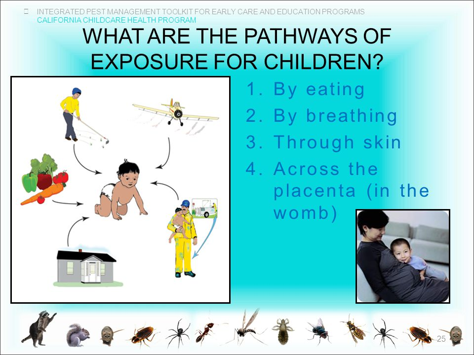 INTEGRATED PEST MANAGEMENT TOOLKIT FOR EARLY CARE AND EDUCATION PROGRAMS CALIFORNIA CHILDCARE HEALTH PROGRAM WHAT ARE THE PATHWAYS OF EXPOSURE FOR CHILDREN.