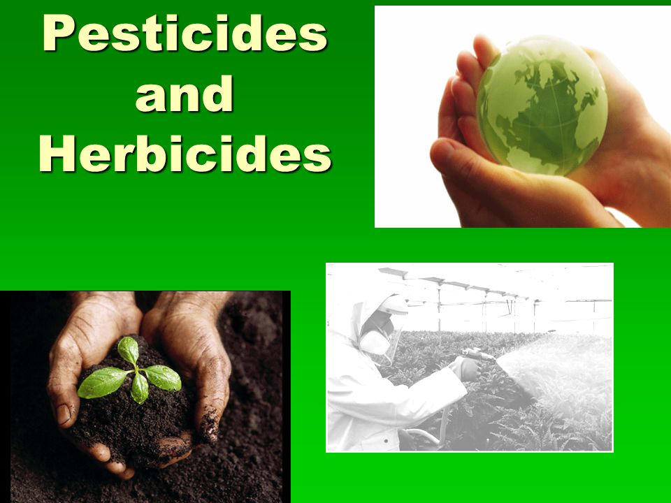 Health Effects of Pesticides on Consumers  There are concerns that pesticides used to control pests on food crops are dangerous to people who consume those foods  Many food crops, including fruits and vegetables, contain pesticide residues after being washed or peeled