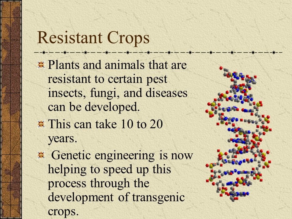 Resistant Crops Plants and animals that are resistant to certain pest insects, fungi, and diseases can be developed.