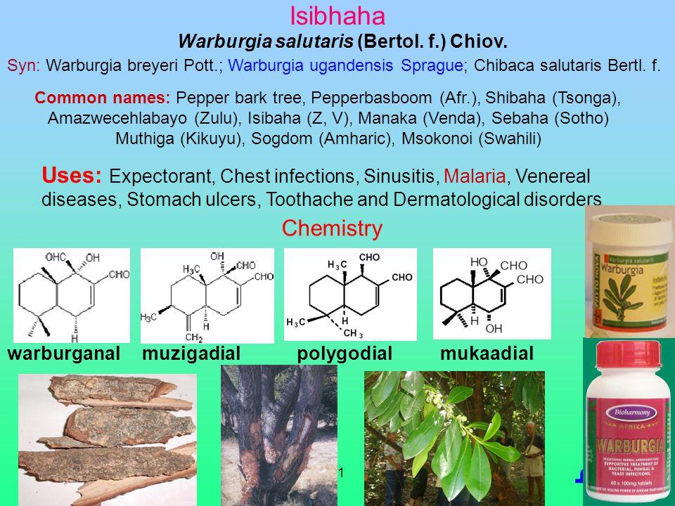 11 Isibhaha Syn: Warburgia breyeri Pott.; Warburgia ugandensis Sprague; Chibaca salutaris Bertl. f. Uses: Expectorant, Chest infections, Sinusitis, Ma