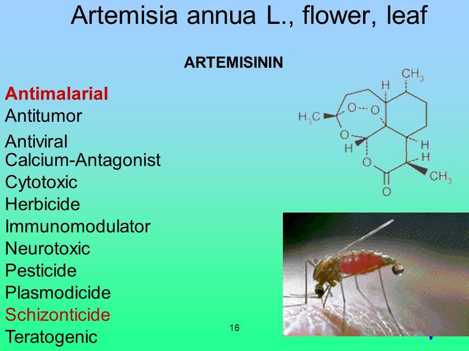 16 Artemisia annua L., flower, leaf ARTEMISININ Antitumor Antiviral Calcium-Antagonist Cytotoxic Herbicide Immunomodulator Neurotoxic Pesticide Plasmo