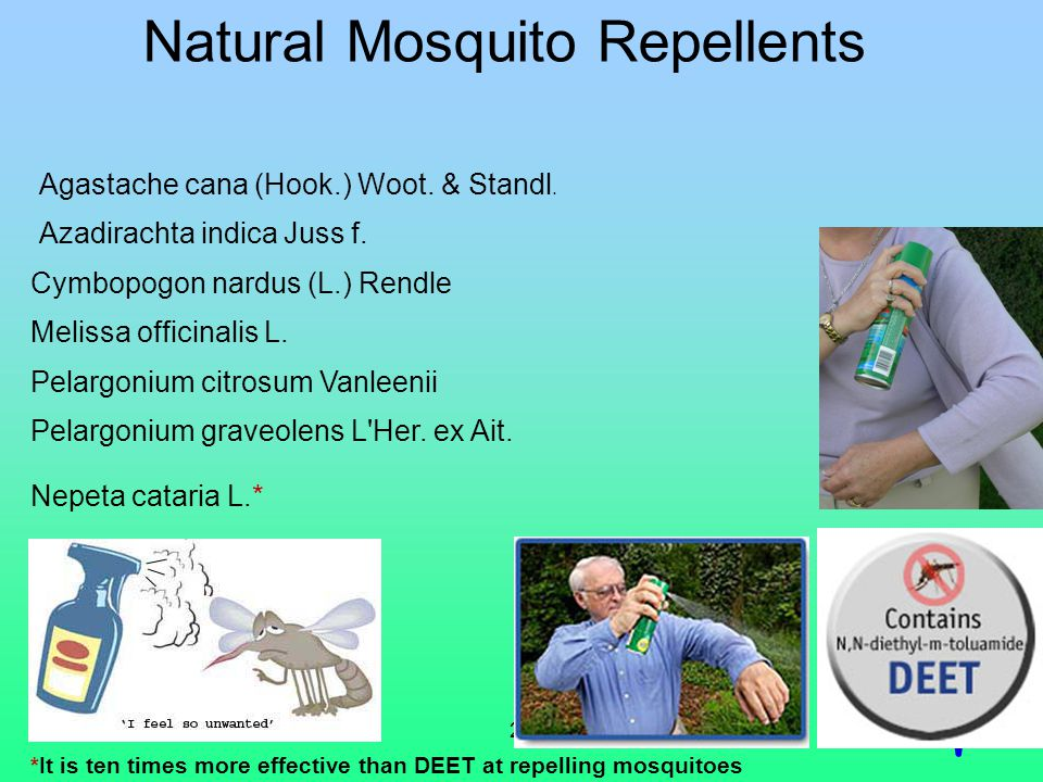24 Natural Mosquito Repellents *It is ten times more effective than DEET at repelling mosquitoes Agastache cana (Hook.) Woot.