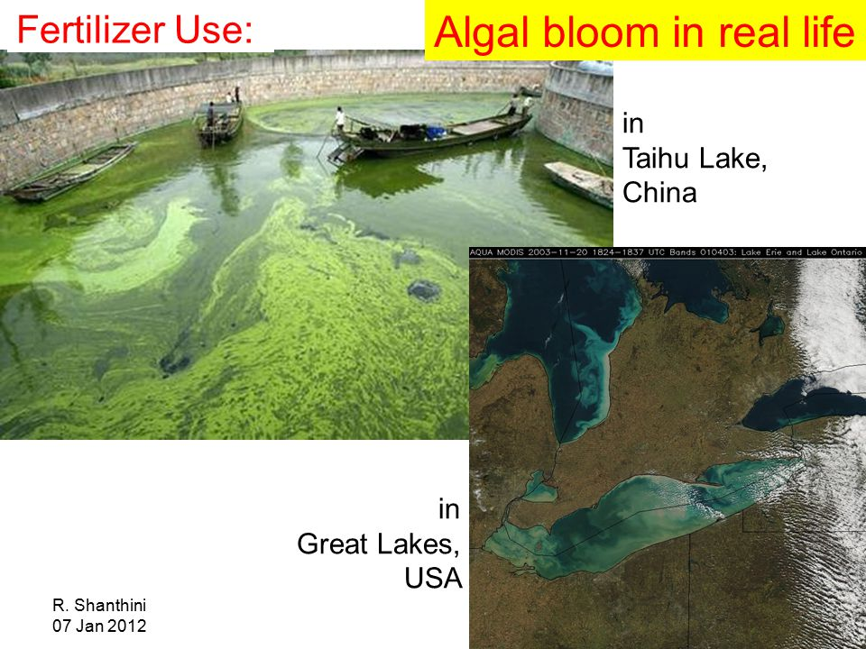 R. Shanthini 07 Jan 2012 in Taihu Lake, China Algal bloom in real life in Great Lakes, USA Fertilizer Use: