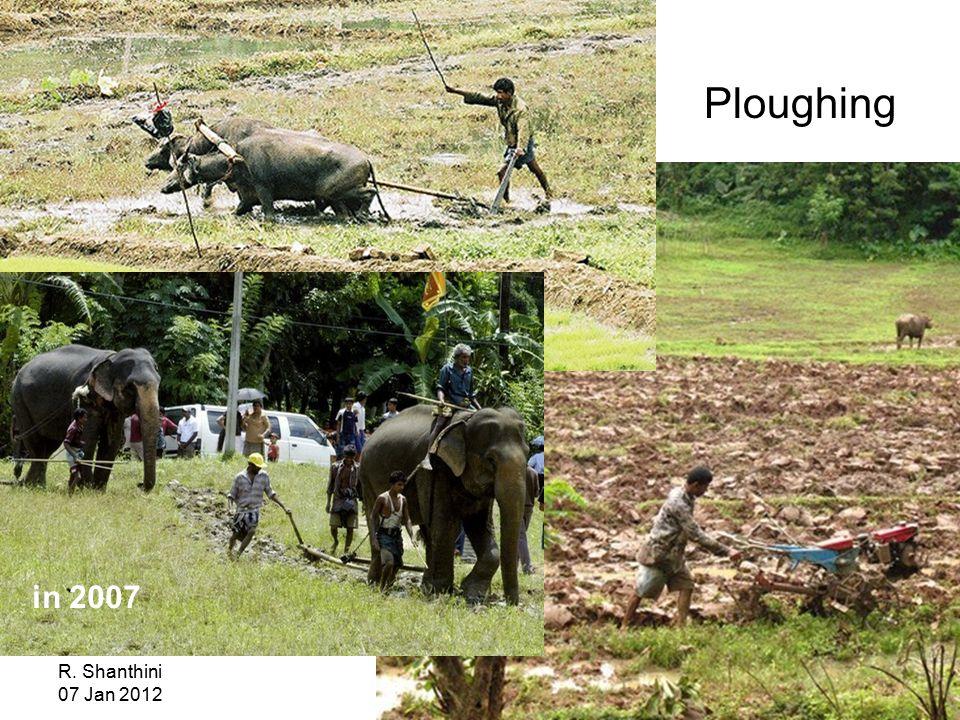 R. Shanthini 07 Jan 2012 Ploughing in 2007