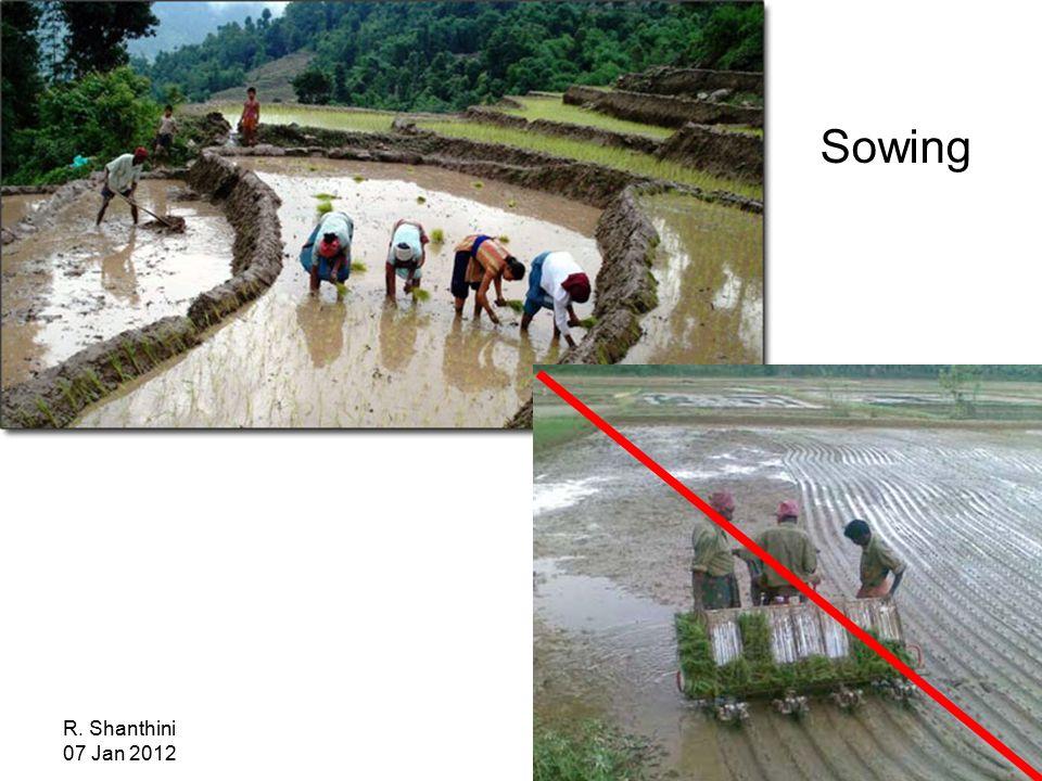 R. Shanthini 07 Jan 2012 Sowing