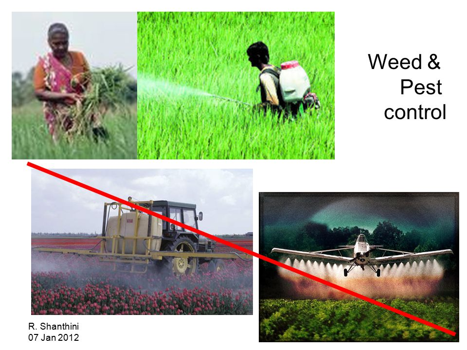R. Shanthini 07 Jan 2012 Weed & Pest control