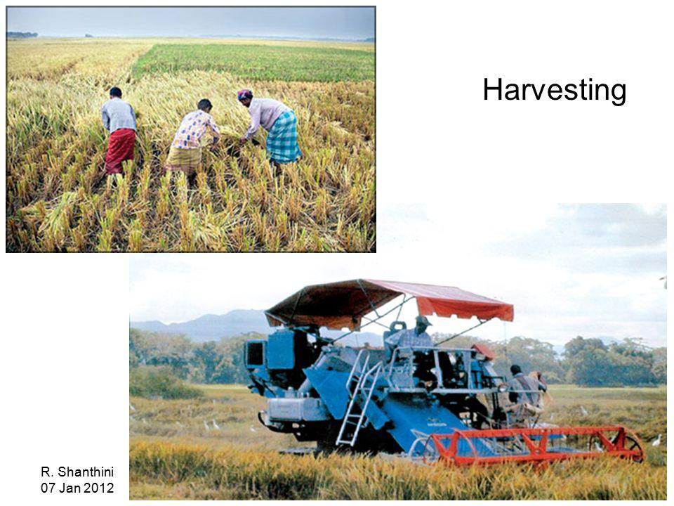 R. Shanthini 07 Jan 2012 Harvesting